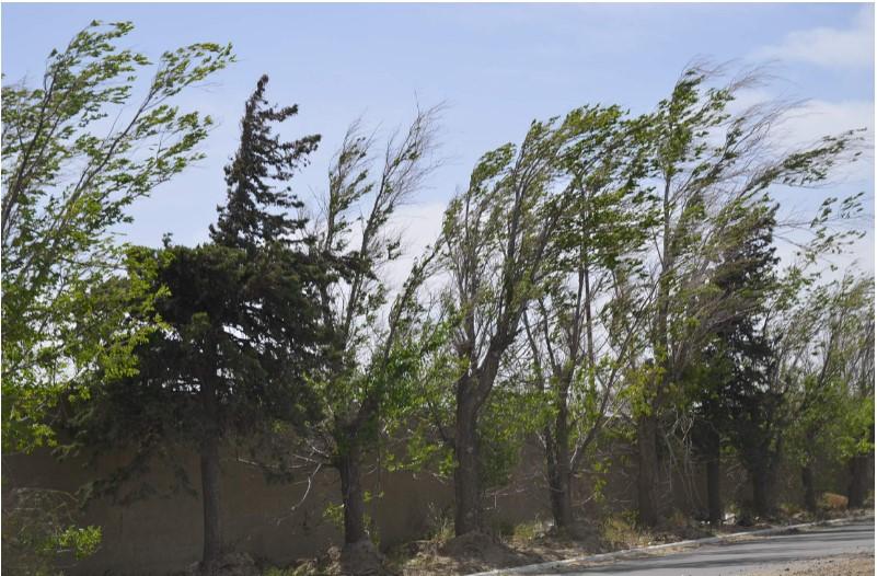 Alerta Protección Civil por vientos que rebasarán los 75 km/h