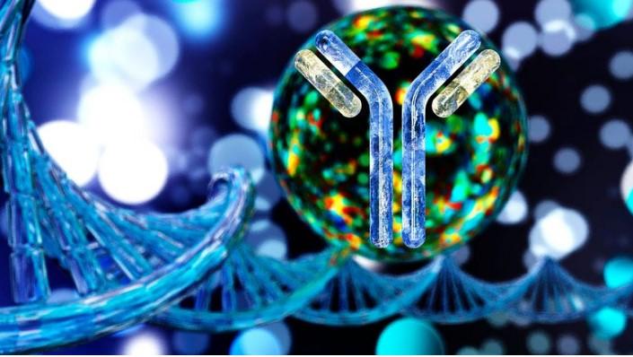 Cómo funcionan los anticuerpos monoclonales, un tratamiento que podría reducir el riesgo de enfermar gravemente por COVID-19