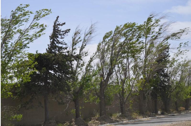 Alerta Protección Civil: rachas de viento pueden superar los 75 km/h este jueves y viernes