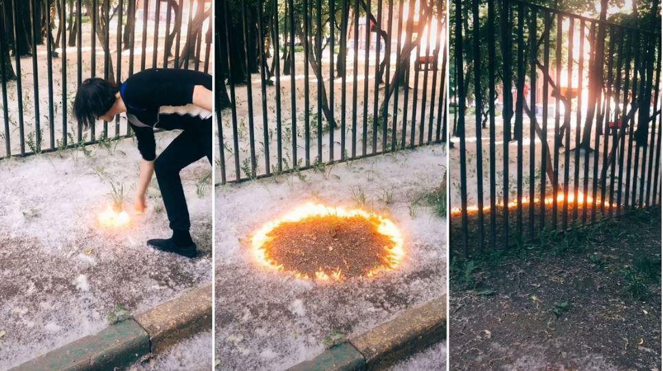 Una tendencia peligrosa en TikTok: jóvenes prenden fuego a pelusas de álamo y provocan consecuencias graves